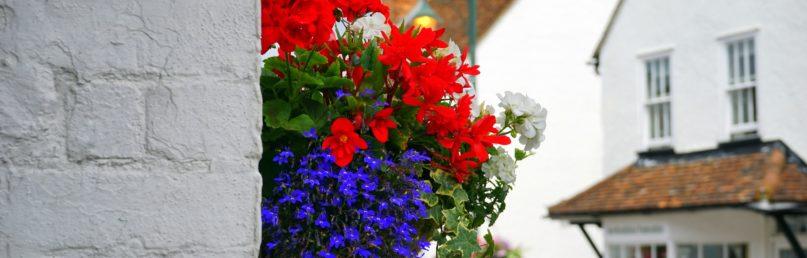 Изображение - Порядок переоформления доли в квартире на родственника TSvetochnye-ukrasheniya-v-gorshke-na-stene-doma-Flower-decorations-in-a-pot-on-the-wall-at-home-6000h3376-807x258